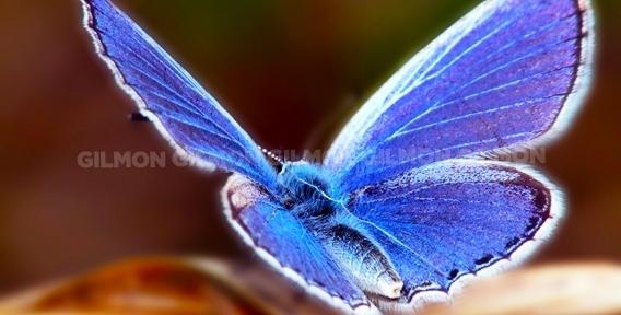 """""""Парк живых тропических бабочек"""" в ТРК """"Куба"""". Уголок живой природы в шаговой доступности!"""